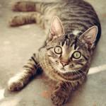 猫の家出、犬の家出(1)
