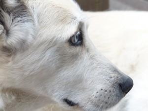 dog-186222_640