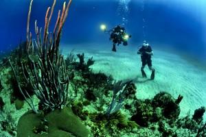 divers-681516_640