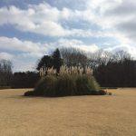冬は温室のある公園へ!神代植物公園と蕎麦